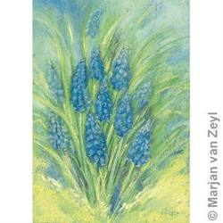 Buy Postcards- Grape Hyacinth 5 pack SAVE 40% D in AU Australia.