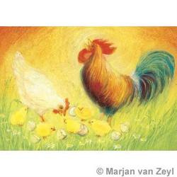 Buy Postcards- Rooster Hen and Chicks 5 pk in AU Australia.