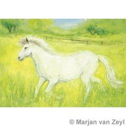 Buy Postcards- Little White Horse 5 pk in AU Australia.