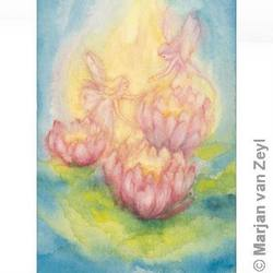 Buy Postcards- Nymphaea 5 pack in AU Australia.