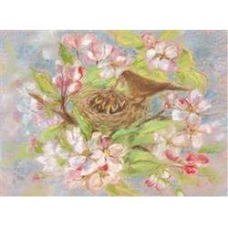 Buy Postcards- Bird Nest 5 pk in AU Australia.