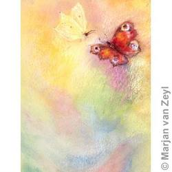 Buy Postcards- Butterfly World 5 pack in AU Australia.