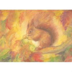 Buy Postcards- Squirrel 5 pk in AU Australia.