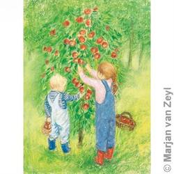 Buy Postcards- Apple Harvest 5 pack in AU Australia.