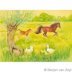 Buy Postcards- Frisky Foal in the Meadow 5 pk in AU Australia.