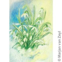 Buy Postcards- Snowdrops 10 pack in AU Australia.